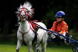 buggy-race